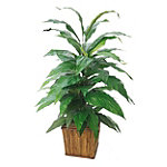 Foster's Point 4' Double Aspidistria Floor Plant 149.00