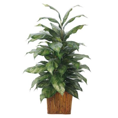 Foster's Point 4' Double Chinese Evergreen Floor Plant
